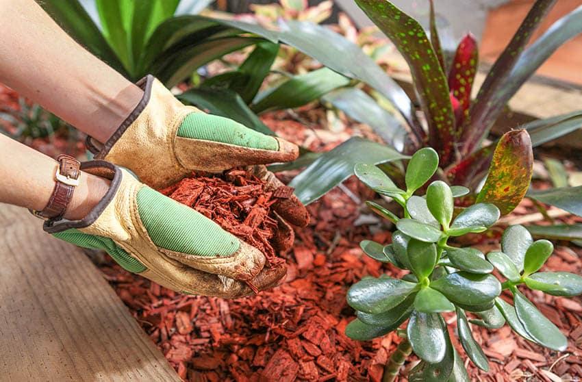 Red cedar chip mulch