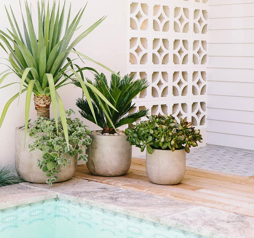 Shaded patio with potted palm trees