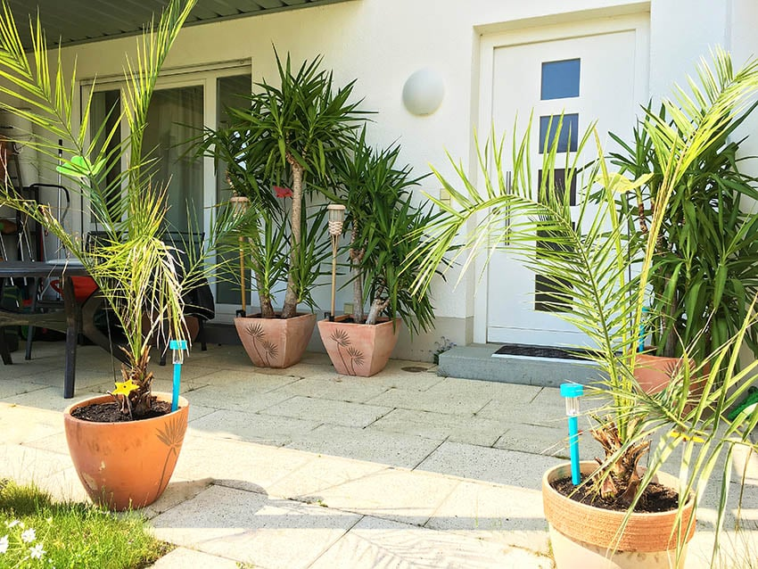 Shady patio with potted palm trees