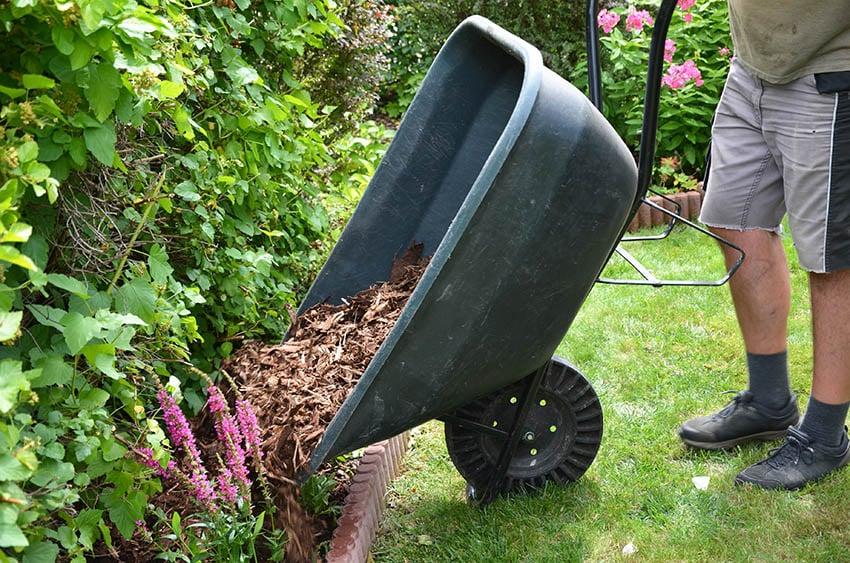 Wheelbarrow of wood chip mulch in garden