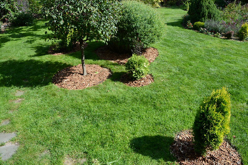Wood chip mulch around trees shrubs