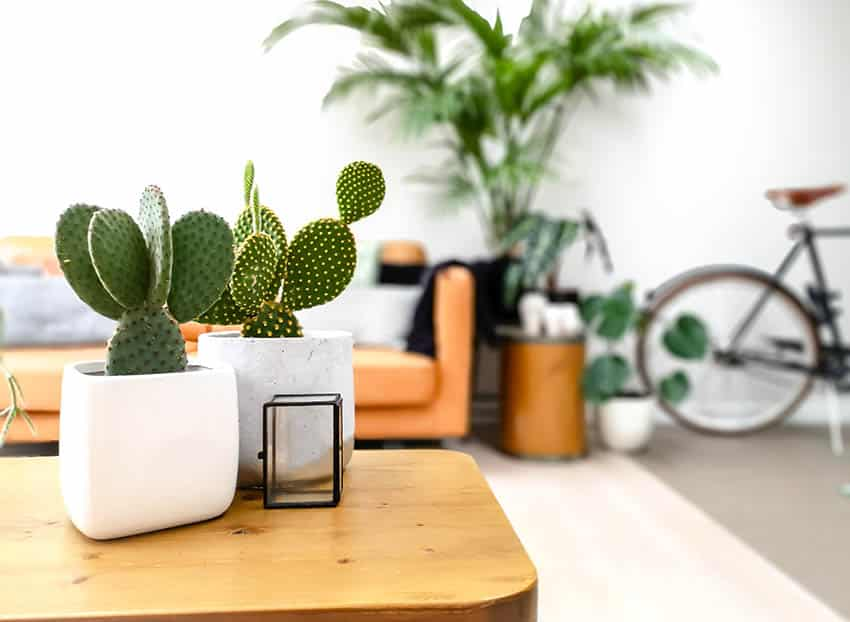 Living room with small potted indoor prickly pear cactus on coffee table