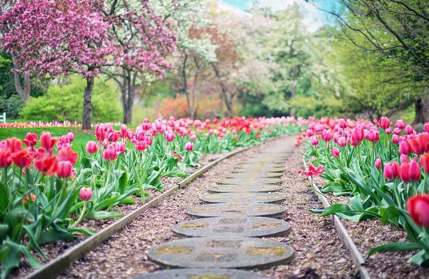 Pathway with wood garden edge
