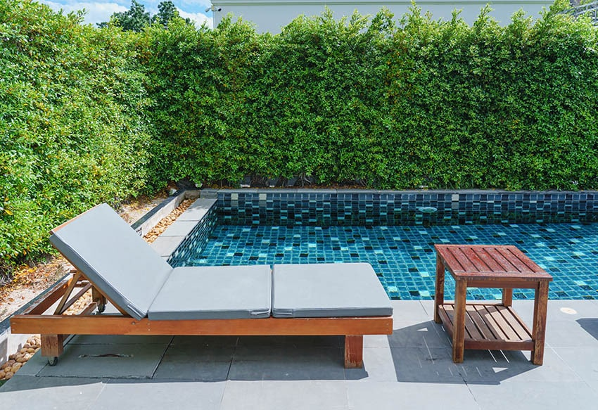 Backyard plunge pool with privacy hedges