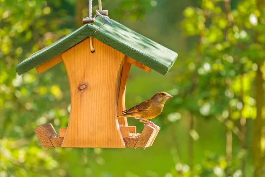 Bird perched on a birdhouse