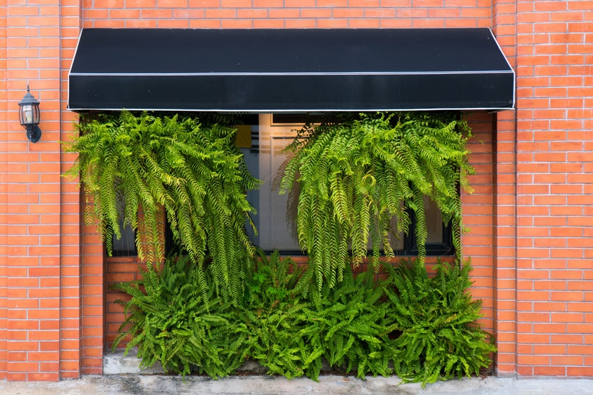 Black awning on brick wall with ferns