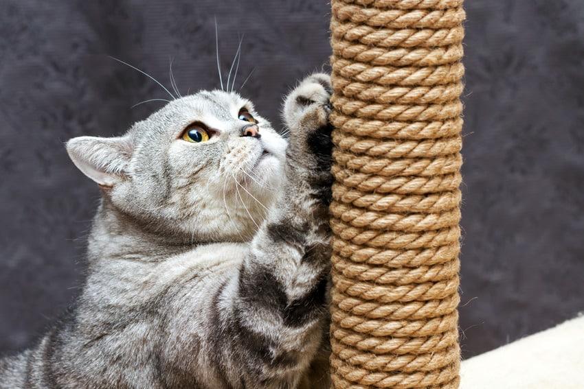 Use scratchpost as cat deterrent