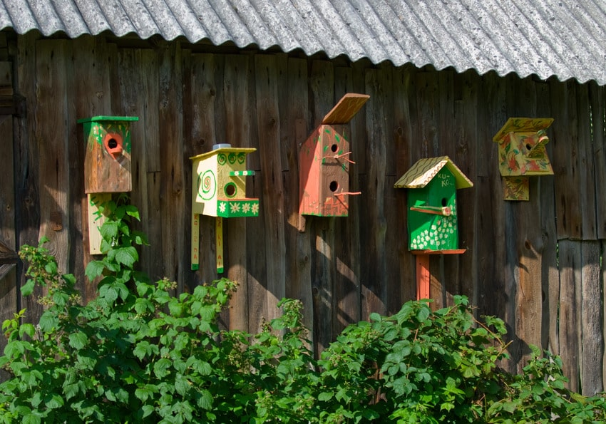 Colorful birdhouses against a wooden wall