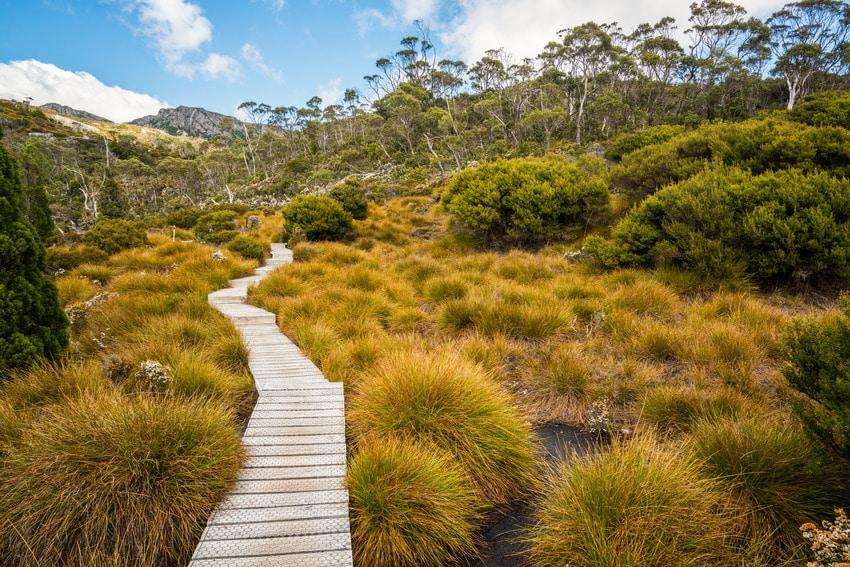 Ornamental grasses at a national park