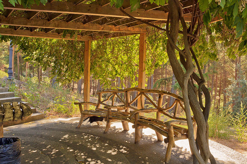 Wood pergola with hanging vines