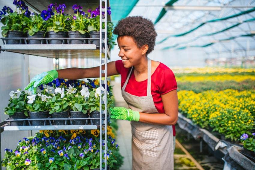 Adjustable shelves for greenhouses