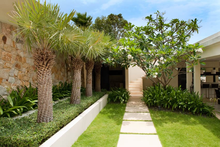 Backyard with palm trees and pathway