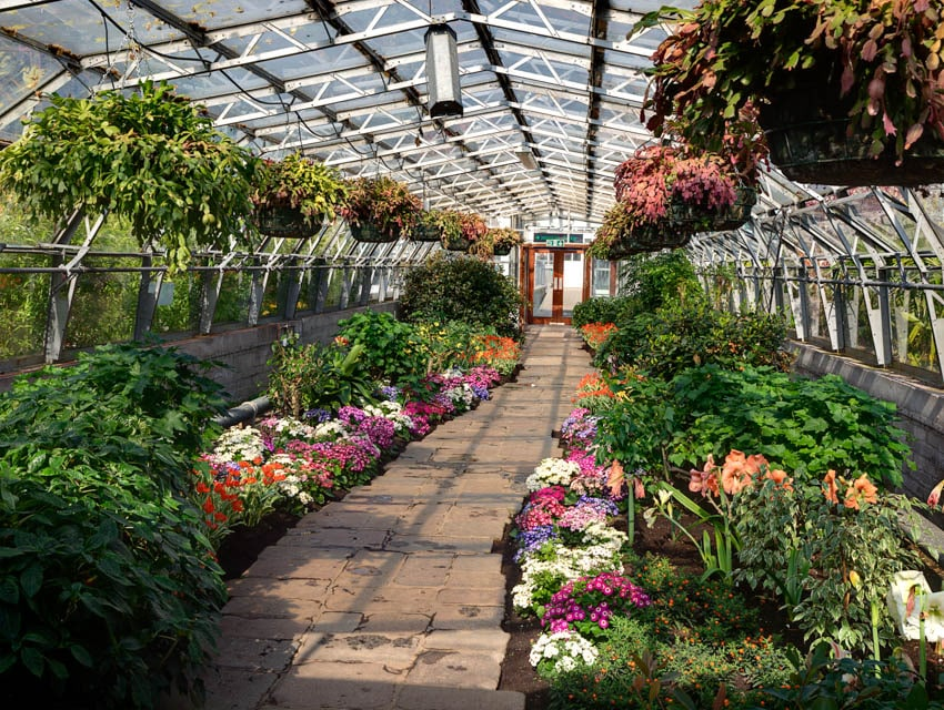 Flowers and plants inside greenhouse