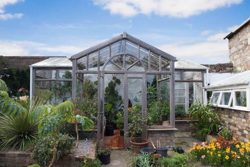 Greenhouse plants flowers