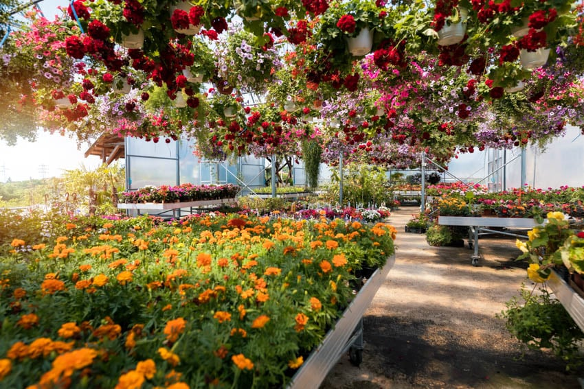 Hanging plants and flowers in greenhouse