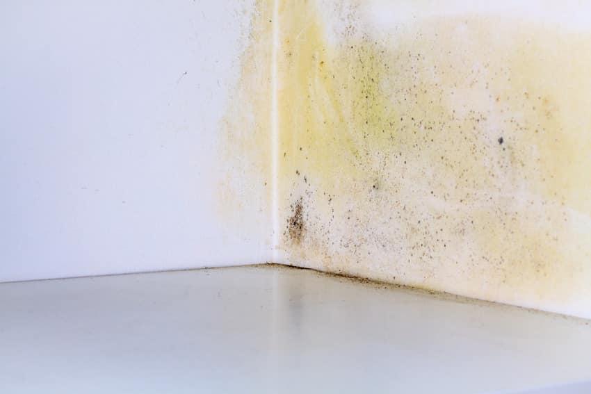 Persistent mold on room corner