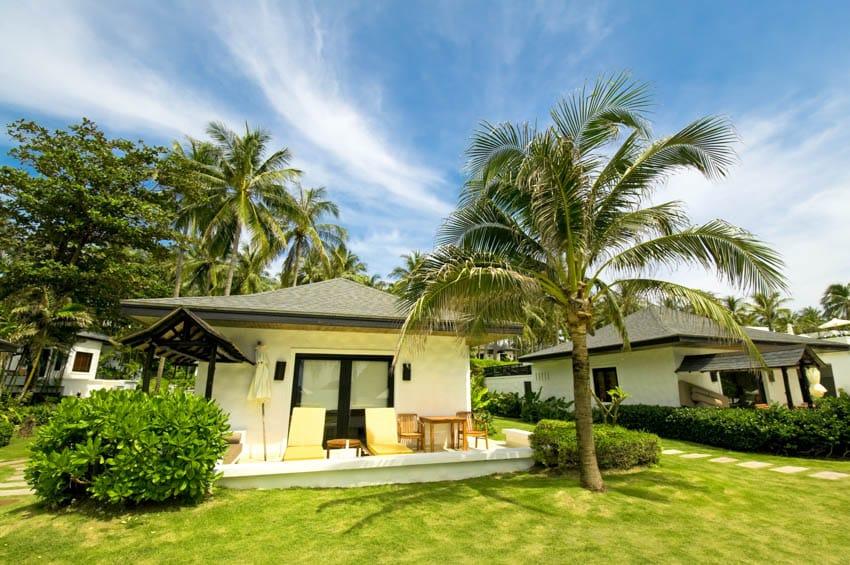 Vacation villa backyard lawn palm tree