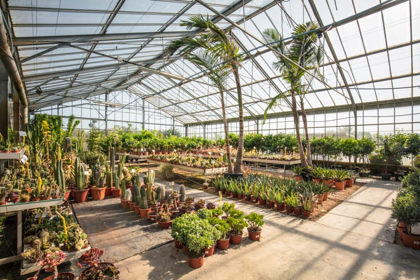 Variety of plants grown inside greenhouse