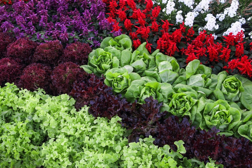 Various hydroponic vegetables and flowers