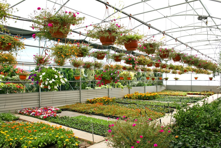 Various plants and flowers in greenhouse