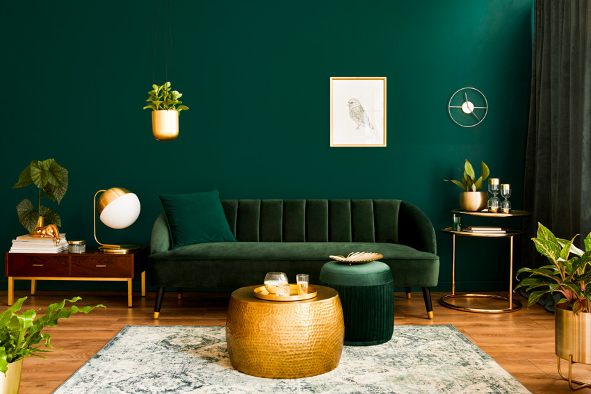 Dark green wall couch rug curtain indoor plant