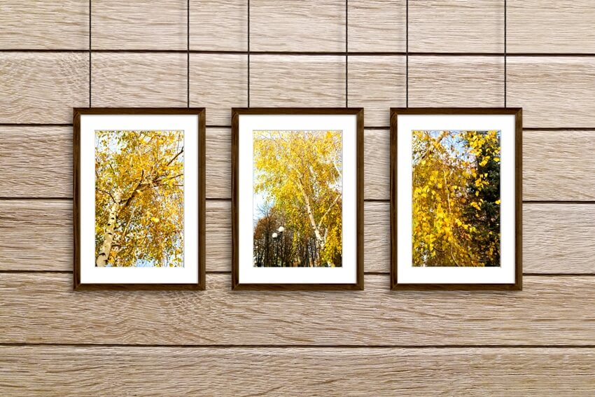 Wooden frames hanging on wire against oak tree panels wall with colorful autumn pictures
